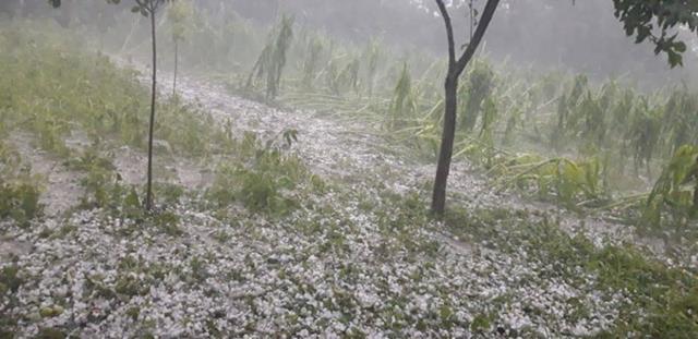 Dezastru la Mihalaseni. Ploaia de ieri a distrus culturi agricole pe suprafețe întregi – FOTO