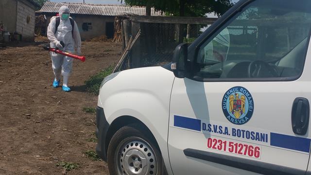 Un nou caz de pestă porcină, la un porc domestic, în satul Bașeu, comuna Hudești