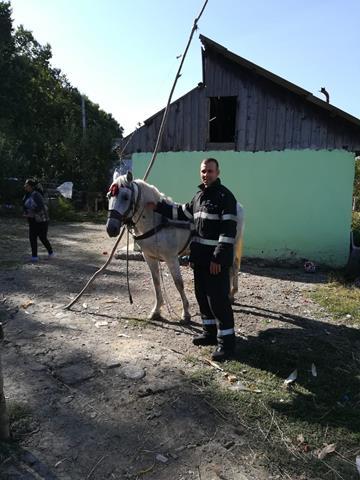 Cal căzut într-un beci, salvat de pompieri