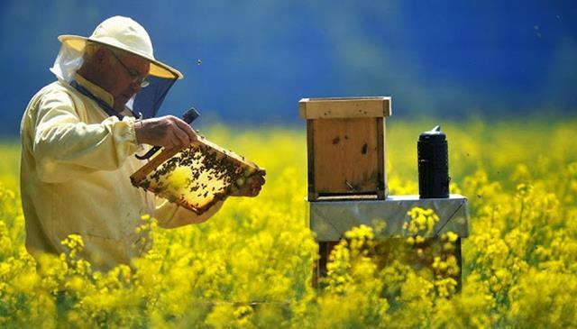 Ajutor de minimis pentru compensarea efectelor fenomenelor hidrometeorologice nefavorabile manifestate în perioada martie – mai 2019 asupra sectorului apicol