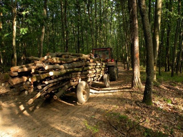 Amendă pentru depozitarea şi comercializarea de material lemnos fără respectarea prevederilor legale