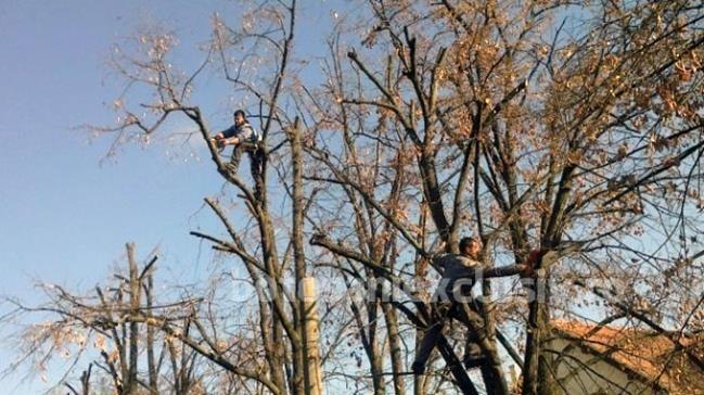 Infracțiune silvică constatată de jandarmi
