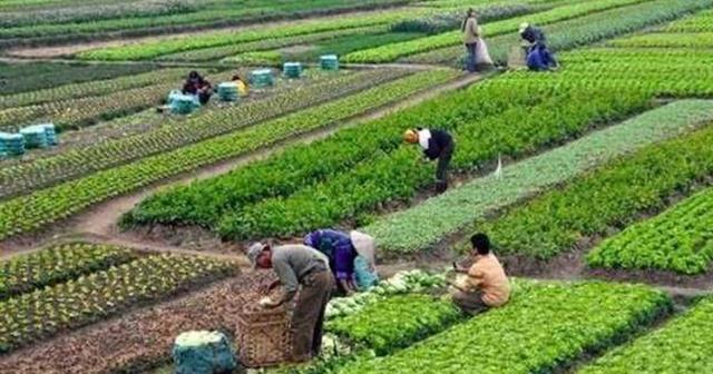 900 locuri de muncă în domeniul agricol (recoltare fructe)în Spania, prin intermediul Reţelei EURES ROMÂNIA