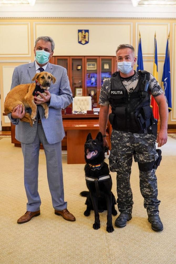 S-a înființat Poliția Animalelor printr-o ordonanță de urgență! Va avea 488 de angajaţi şi 88 de medici veterinari
