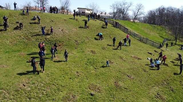 VIDEO/FOTO  Angajații Consiliului Județean Botoșani au marcat Luna Plantării Arborilor, printr-o acțiune de plantare de arbori la Agafton