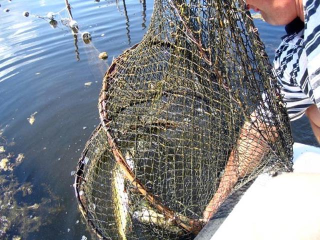 VIDEO/ Pescari sancționați de Garda de Mediu