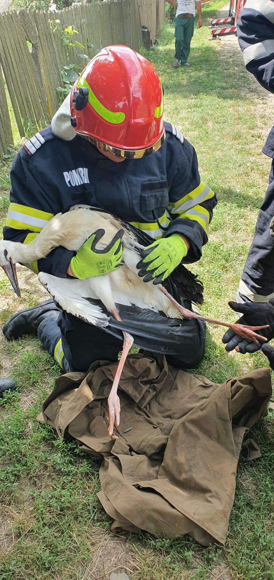 FOTO | Pui de barză salvat de pompieri